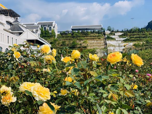 Sa Pa nhận kỷ lục thung lũng hoa hồng lớn nhất Việt Nam - Ảnh 2.