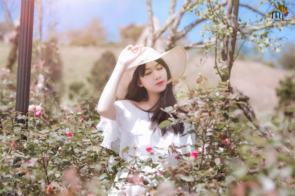 Sa Pa nhận kỷ lục thung lũng hoa hồng lớn nhất Việt Nam - Ảnh 1.