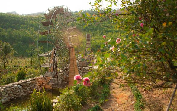 Sa Pa nhận kỷ lục thung lũng hoa hồng lớn nhất Việt Nam - Ảnh 5.