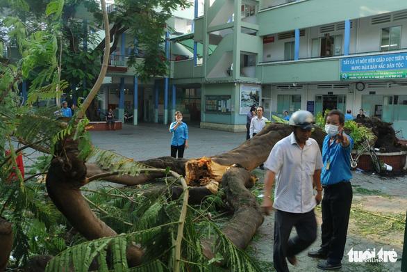 Cây phượng vĩ trong sân trường bật gốc, 18 học sinh ở TP.HCM bị thương - Ảnh 5.