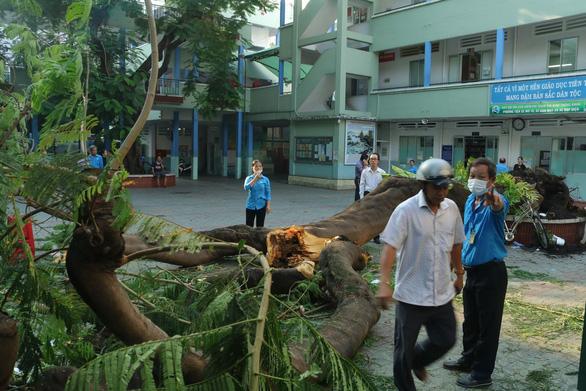 Cây phượng vĩ trong sân trường bật gốc, 13 học sinh ở TP.HCM bị thương - Ảnh 6.