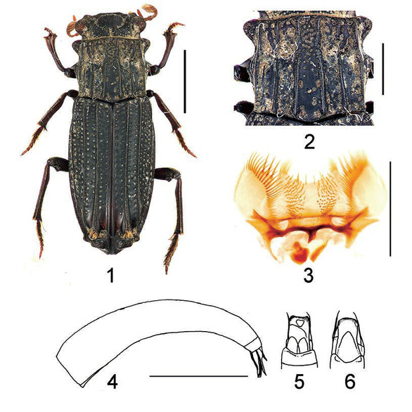 Phát hiện một số loài côn trùng mới tại Việt Nam - Ảnh 1.