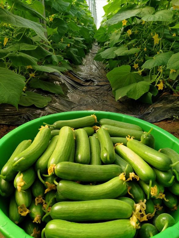 Những người trẻ lội ngược dòng ở miền Tây - Kỳ 5: Bỏ phòng LAB, về vườn làm nông sản sạch - Ảnh 3.