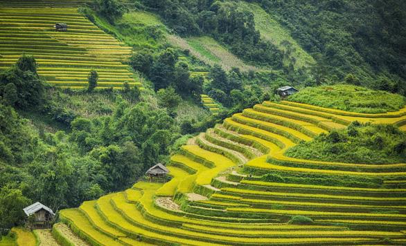 Ruộng bậc thang Việt Nam được sử dụng trong thiết kế cảnh quan - Ảnh 1.