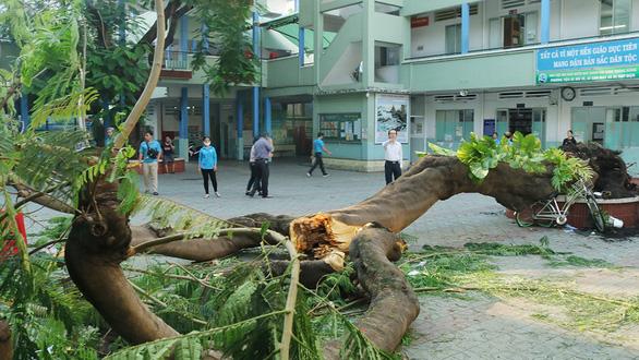 TP.HCM sẽ có quy chế quản lý, chăm sóc cây xanh trường học - Ảnh 1.