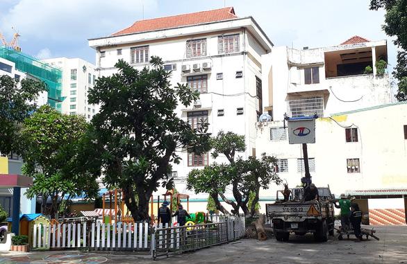 Sợ chuyện không may xảy ra, nhiều trường chặt cây xanh lâu năm, già cỗi  - Ảnh 1.