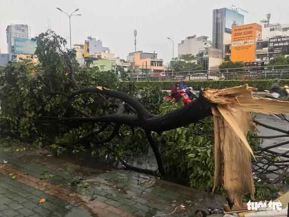 TP.HCM: Mưa lớn nước chảy như lũ trên phố, cây gãy cành đè người đi đường - Ảnh 7.