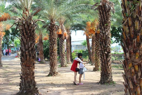 Check-in vườn chà là rực rỡ độc đáo ở miền Tây - Ảnh 1.