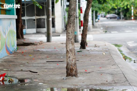 Nhiều cây xanh ven đường đang bị bóp cổ bằng ximăng - Ảnh 3.