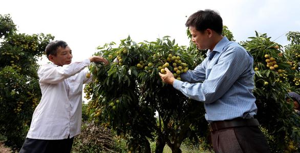 Chuyên gia Nhật chuẩn bị sang Việt Nam giám sát xuất khẩu vải thiều - Ảnh 1.