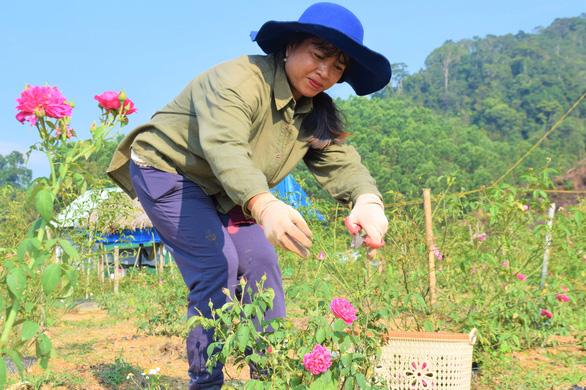 Hoa hồng trên đồi núi Tây Giang - Ảnh 3.