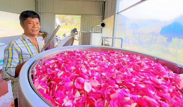 Hoa hồng trên đồi núi Tây Giang - Ảnh 1.