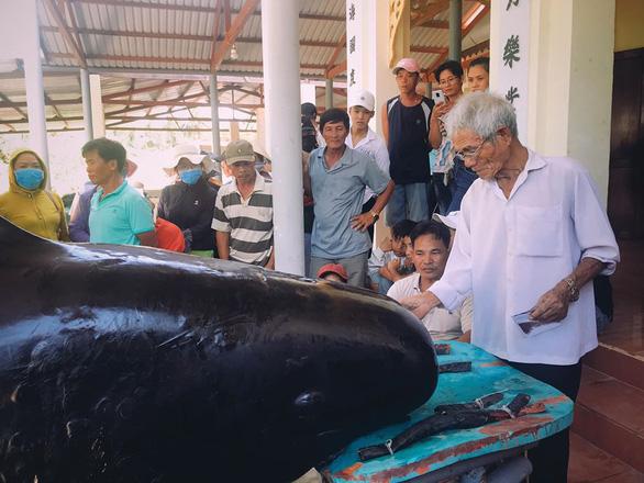 Hàng trăm người vây xem cá Ông Chuông lụy bờ ở Nha Trang - Ảnh 2.