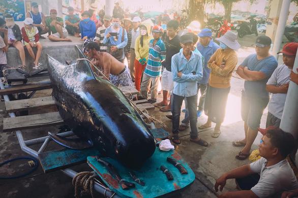 Hàng trăm người vây xem cá Ông Chuông lụy bờ ở Nha Trang - Ảnh 3.