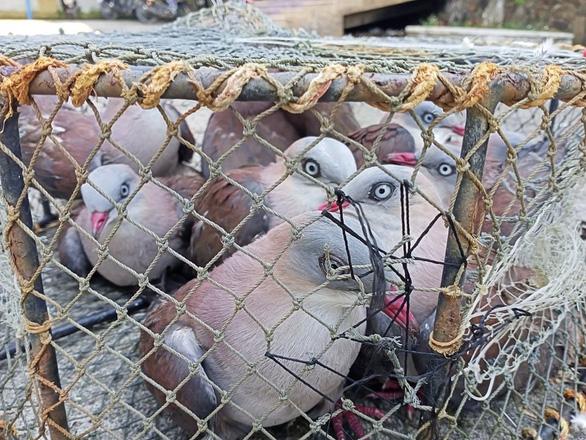 Kiểm lâm Huế giải cứu hơn 20 con chim gầm ghì lưng nâu quý hiếm - Ảnh 2.