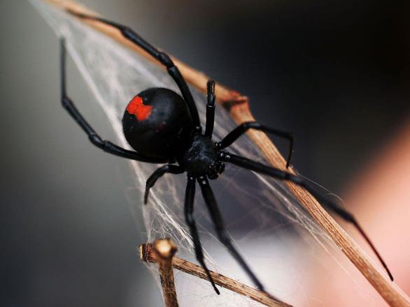 Ba em nhỏ nhập viện vì cho nhện cắn để trở thành siêu nhân nhện - Ảnh 1.