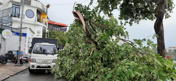 Mưa lớn kèm gió mạnh, hàng loạt cây cối ở Cần Thơ bật gốc - Ảnh 7.