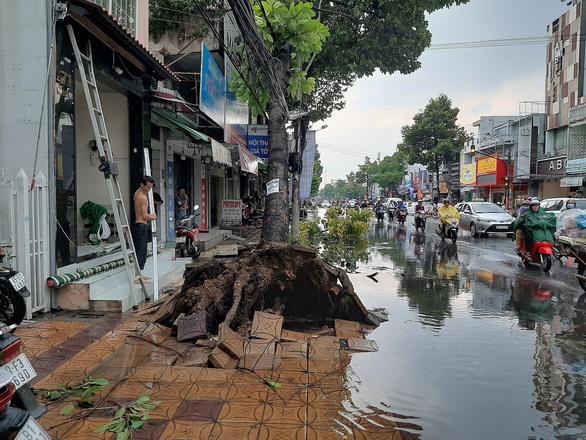 Cần Thơ: 1 người chết do mưa dông, nhiều nhà tốc mái, cây xanh bật gốc - Ảnh 1.