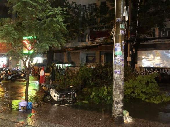 Cây xanh đường Tô Hiến Thành, TP.HCM ngã trong mưa đè chết người - Ảnh 1.