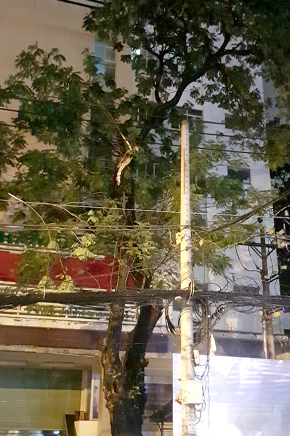 Cây xanh đường Tô Hiến Thành, TP.HCM tét nhánh trong mưa đè chết người - Ảnh 4.