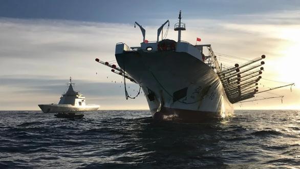 Săn lùng các đội tàu sát thủ đại dương - Kỳ 2: Càn quét Nam Mỹ - Ảnh 1.