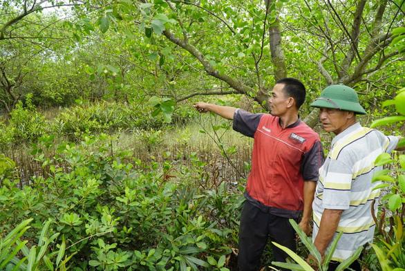 Thêm 'án' cảnh cáo cho phó chủ tịch huyện chuyển đất nuôi tôm thành đất ở - Ảnh 1.