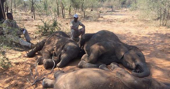 Bí ẩn hơn 150 con voi chết chưa rõ nguyên nhân - Ảnh 1.