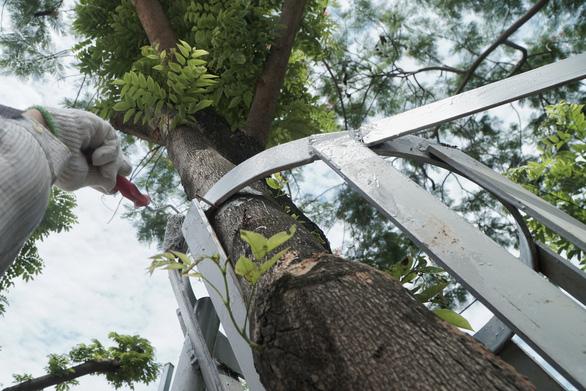 Mặc áo giáp sắt kiên cố, thuê bảo vệ trông hàng cây sưa đỏ để tránh bị cưa trộm - Ảnh 5.