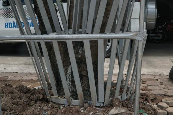 Mặc áo giáp sắt kiên cố, thuê bảo vệ trông hàng cây sưa đỏ để tránh bị cưa trộm - Ảnh 4.