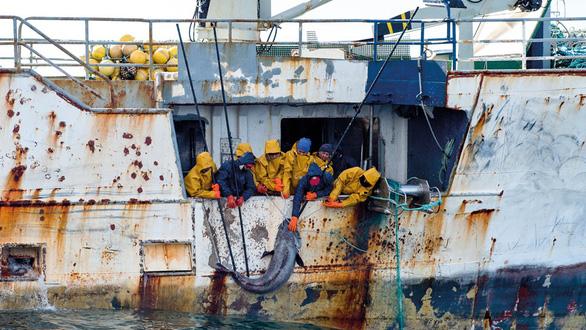 Săn lùng các đội tàu sát thủ đại dương - Kỳ 5: Truy tìm 6 tàu ma khét tiếng - Ảnh 3.