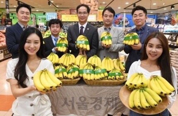 Siêu thị Lotte Mart đưa chuối Việt Nam vào bán tại Hàn Quốc - Ảnh 1.