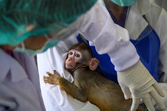 Bộ trưởng y tế Thái Lan tình nguyện thử vắcxin ngừa COVID-19 - Ảnh 2.