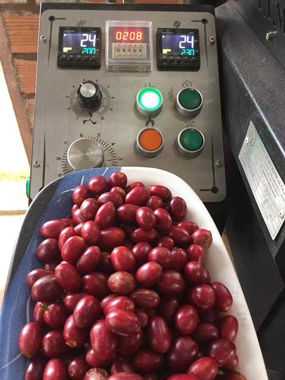 Người cho cà phê ăn hồng, ăn chuối - Ảnh 4.