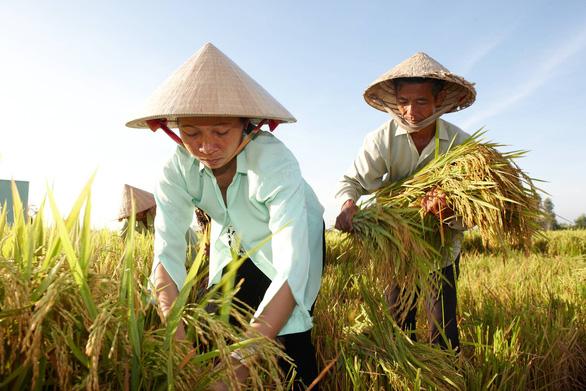 Bayer hỗ trợ hai triệu nông hộ sản xuất nhỏ chịu tác động bởi COVID-19 - Ảnh 1.