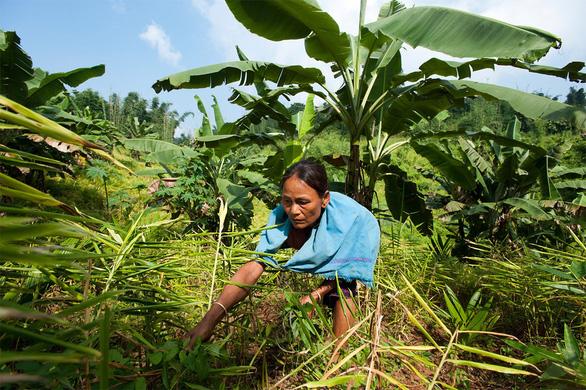 Bayer hỗ trợ hai triệu nông hộ sản xuất nhỏ chịu tác động bởi COVID-19 - Ảnh 2.