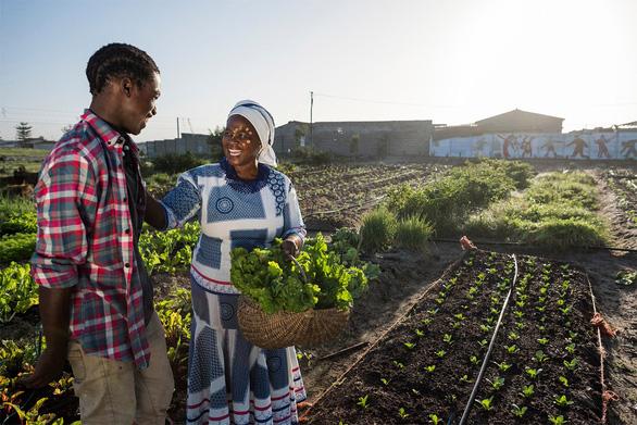 Bayer hỗ trợ hai triệu nông hộ sản xuất nhỏ chịu tác động bởi COVID-19 - Ảnh 3.