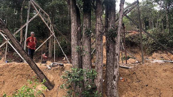 Phá rừng dầu tự nhiên để làm khu tái định cư - Ảnh 1.
