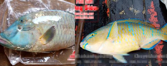 Những người thích ăn vật lạ kích thích tàn phá môi trường biển  - Ảnh 1.