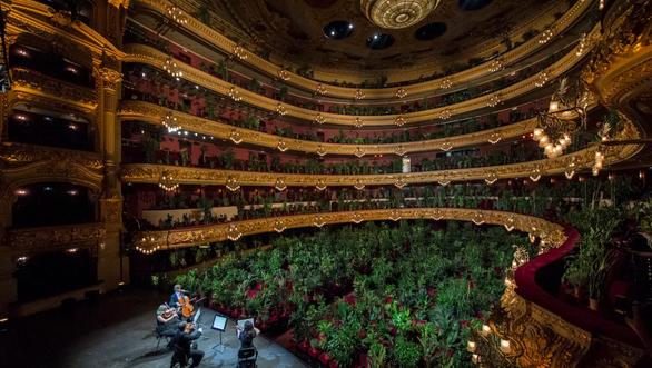 Buổi diễn có một không hai: hòa nhạc cho hơn 2.200 cây xanh nghe - Ảnh 1.