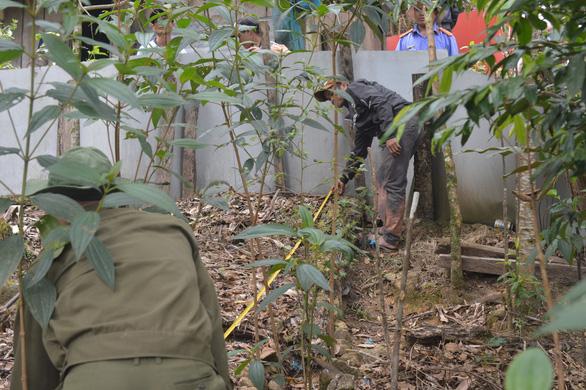 Uống rượu về, ghé vườn sâm nhổ trộm hơn 70 cây sâm Ngọc Linh - Ảnh 1.