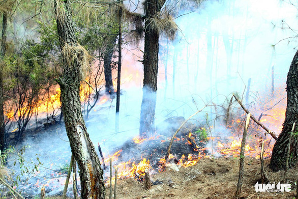 Bộ đội trắng đêm dập lửa cứu rừng - Ảnh 6.