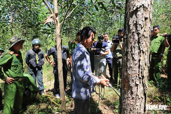 Đầu độc 10ha rừng thông, 7 lâm tặc chia nhau 32 năm tù - Ảnh 2.