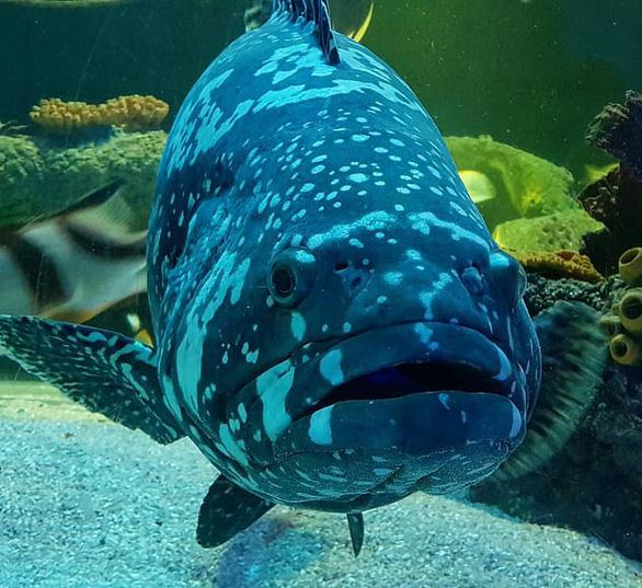 Cá ở thủy cung xem tivi giết thời gian mùa COVID-19 - Ảnh 5.