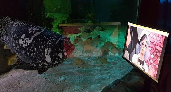 Cá ở thủy cung xem tivi giết thời gian mùa COVID-19 - Ảnh 3.