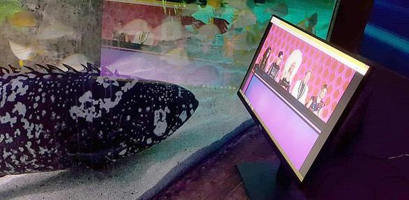 Cá ở thủy cung xem tivi giết thời gian mùa COVID-19 - Ảnh 2.
