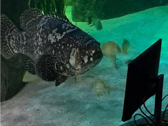 Cá ở thủy cung xem tivi giết thời gian mùa COVID-19 - Ảnh 4.