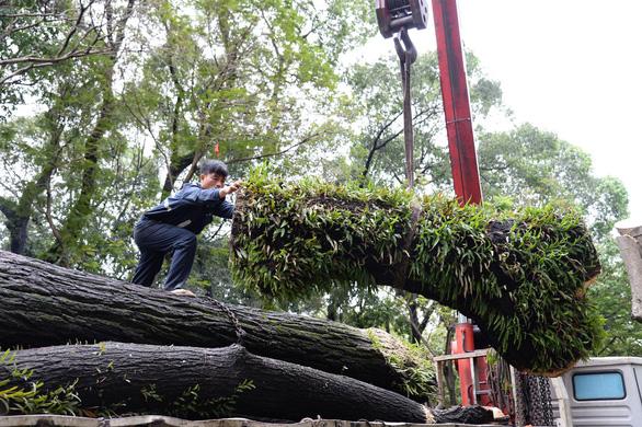 TP.HCM không có chủ trương đốn toàn bộ cây xanh trong sân trường - Ảnh 2.