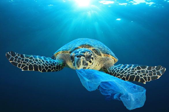 Vì sao sinh vật biển hay nuốt nhầm rác nhựa? - Ảnh 1.