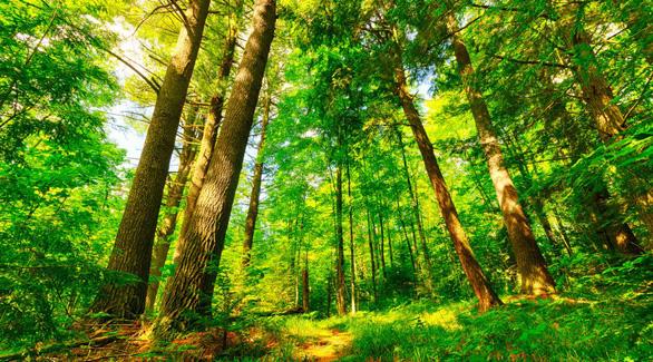 Dùng công nghệ gì để bảo vệ môi trường thế giới? - Ảnh 1.