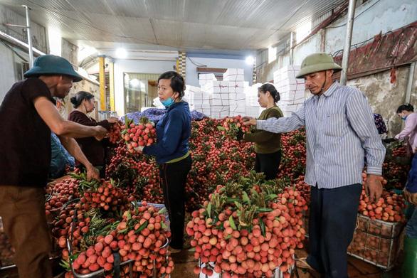 Vải thiều Bắc Giang lên 40.000 - 45.000 đồng/kg, dự báo giá tiếp tục tăng - Ảnh 1.